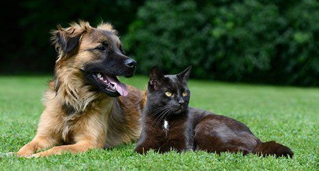 dog and a cat lying together