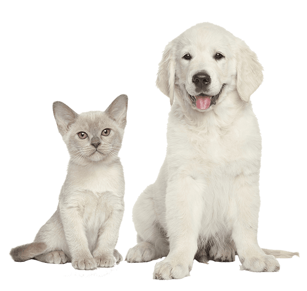 Animal Clinic Waterboro, ME