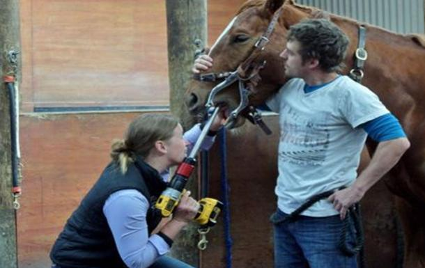 Veterinary dental care by Premier Equine Vets in Canterbury