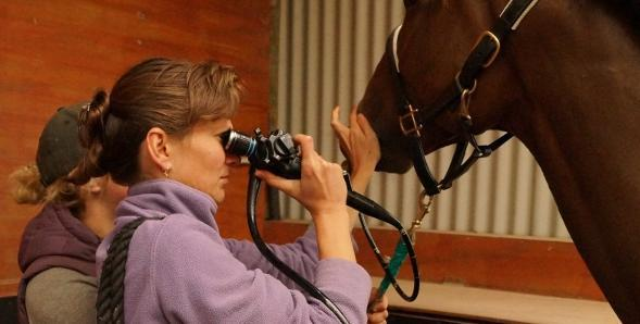Test during equine veterinary treatments in Canterbury