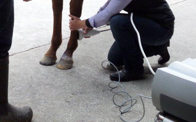 A vet preparing equine treatments in Canterbury
