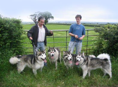 four dogs with staff members