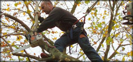 Tree-surgeon---Bedford---Albion-Tree-Surgeons---Tree-Service1