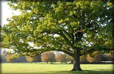 Tree-surgeon---Bedford---Albion-Tree-Surgeons---Tree-Surgery2
