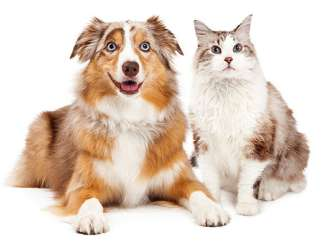 Pet Grooming Salon And Retail Salem Or Paws N Claws