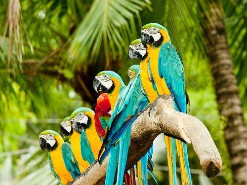 Otto pappagalli su un braccio