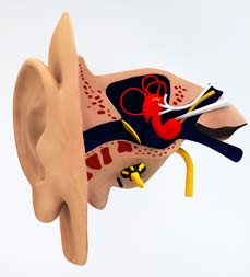 What is Tinnitus? NYC Tinnitus Treatments Located in the West Village of Manhattan New York City 10014