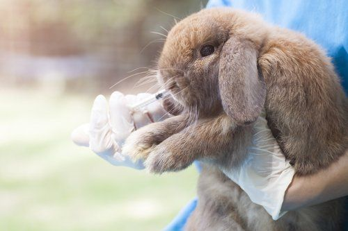 persona con camice azzurro alimenta un coniglio con una siringa