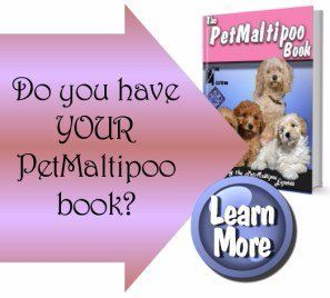 Names For A Maltipoo Puppy Female And Males