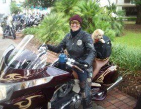 Maltipoo dog on motorcycle