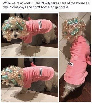 maltipoo-halloween-outfit