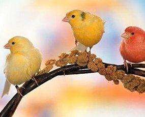 healthy birds
