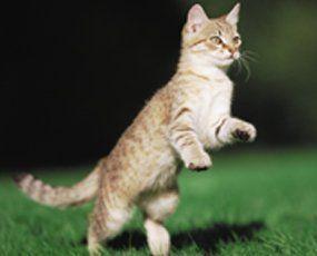 Entertaining cat toys