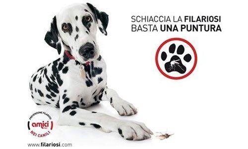 un cane di razza Dalmata e accanto la scritta schiaccia la filariosi basta una puntura