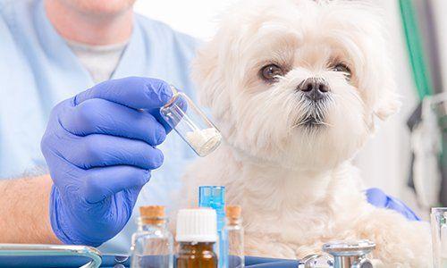 una mano con un guanto blu con un flaconcino di medicine e accanto un cagnolino bianco