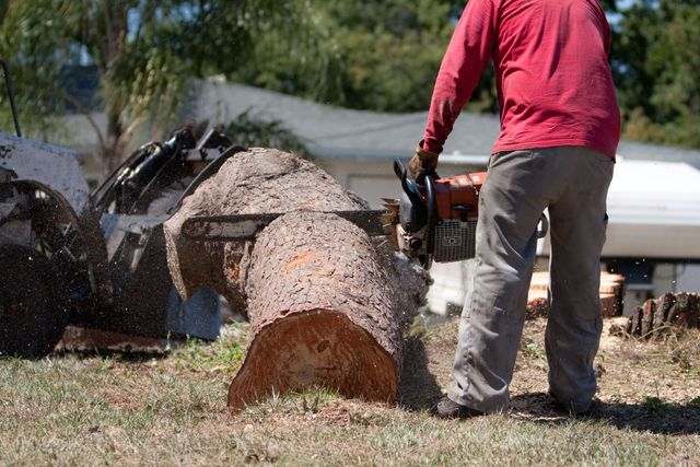 Man sawing a tree trunk