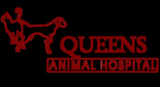 Best Veterinarian in Queens| Queens Animal Hospital-NYC