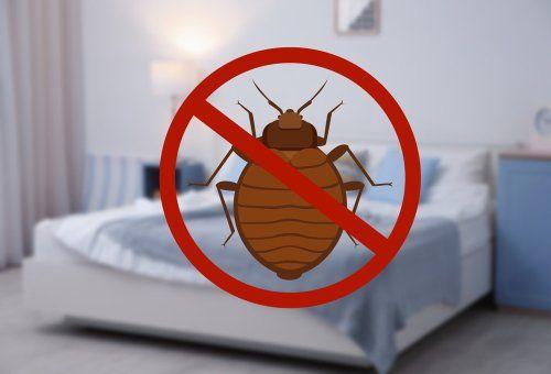 Eliminazione cimici dei letti modugno ba pan eco srl - Cimici da letto cause ...