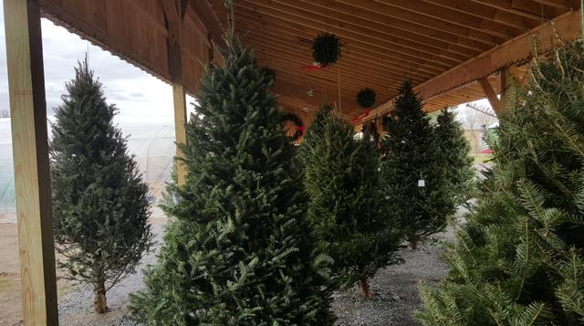 Christmas Trees Ava NY,Christmas Wreaths Ava NY,Christmas ...