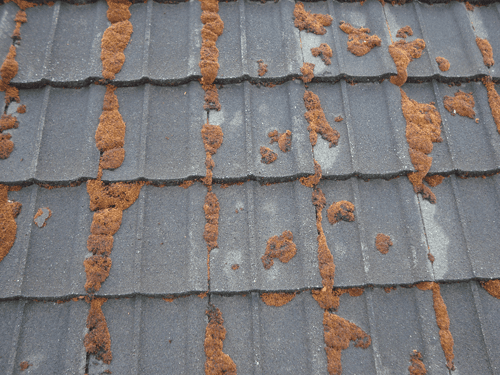 roofing with moss in Wellington
