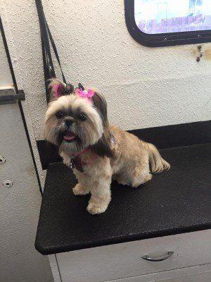 Dog Groomer Greater Spokane Area Wa Spokane Mobile Dog Grooming