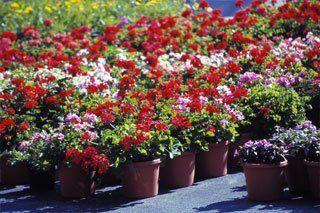 Plant Nursery Jacksonville Fl Thenurseries