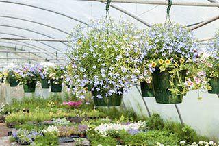 Garden Nursery Jacksonville Fl