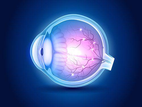 immagine della struttura di un occhio in 3D