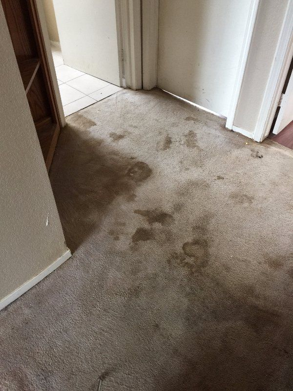Sacramento Carpet Cleaning Before