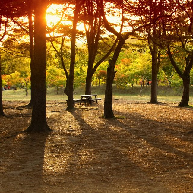 A bench in a park during sunset