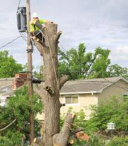 Our team member trimming a tree in Holmen, WI.