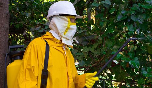 Professionals spraying plants for best pest control in Cornelia, GA