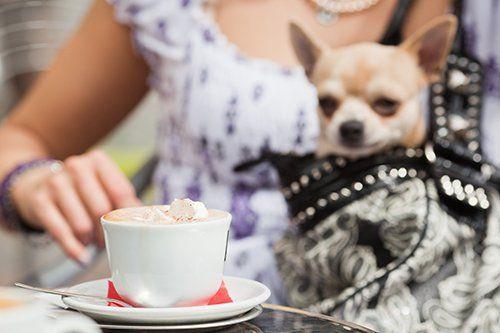 donna beve un capuccino tenendo il cane nella borsa