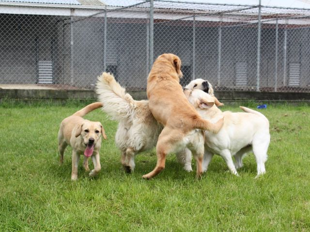 View of dogs at the facility