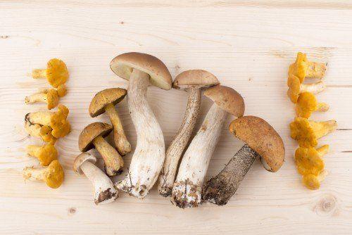 Funghi freschi porcini e finferli
