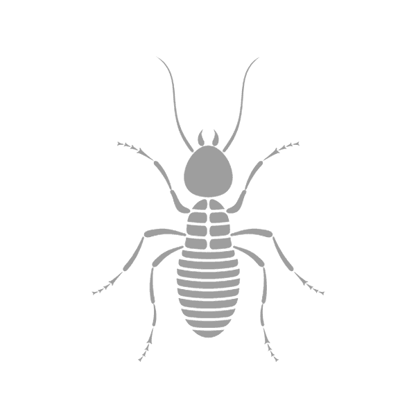 icon mosquito