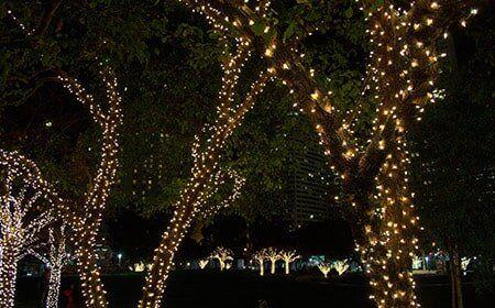 christmas lights tree care in coweta ok - Christmas Lights Tulsa