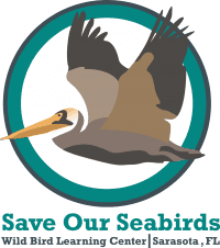 Save Our Seabirds - Living Avian Museum