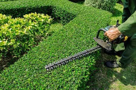 garden specialists