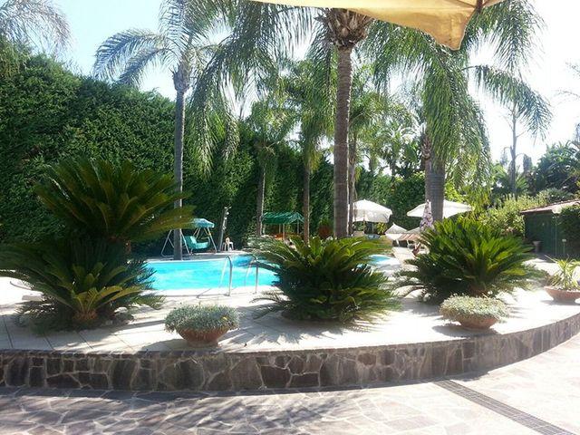 Vista del giardino e della piscina con palme, vasi di fiori. Si intavede un ombrellone giallo