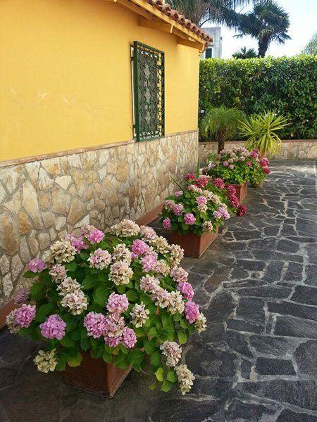 serie di vasi con delle ortensie, due piccole palme e un muro in pietra e vernice gialla con grate verdi alle finestre