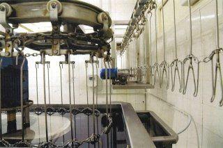 macchina per il confezionamento delle quaglie 2