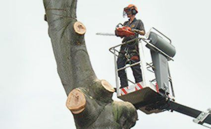Remedial tree surgery