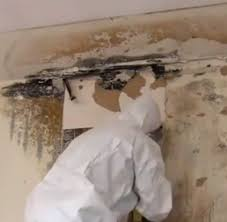 Image result for mold removal st louis