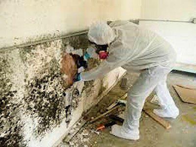 Mold Remediation St Louis