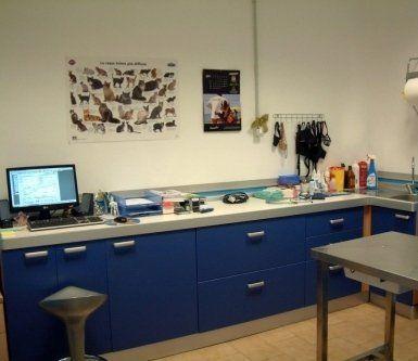clinica veterinaria, veterinario, tuscania, Viterbo