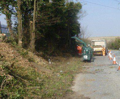 roadside tree clearance