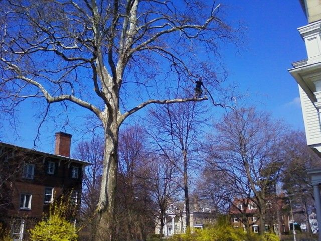Trimming and tree maintenance in Rochester, NY