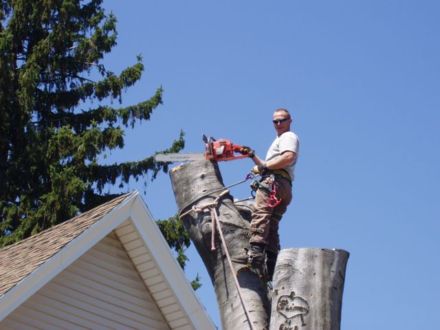 Man performing tree removal and maintenance in Rochester, NY