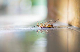 Cockroach Extermination Jacksonville FL